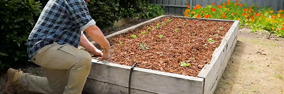 Gardening tips for your home project