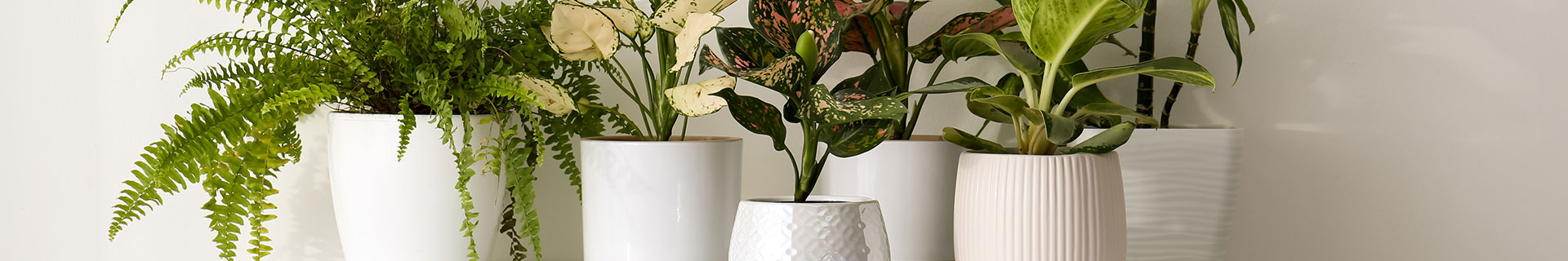 <p>Our top picks for your next house plant</p>