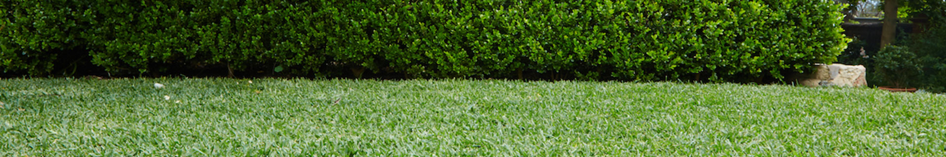 <p>How to take care of your lawn</p> <p></p>