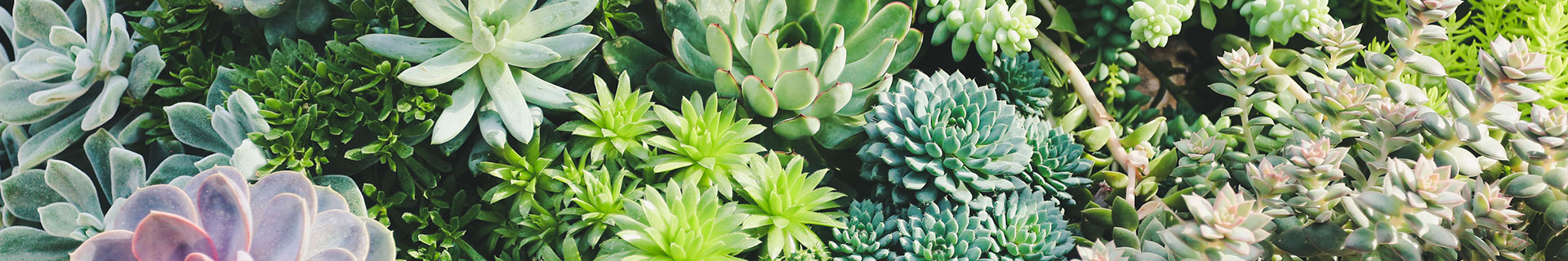 <p>Everything you need to know about succulent plants</p>