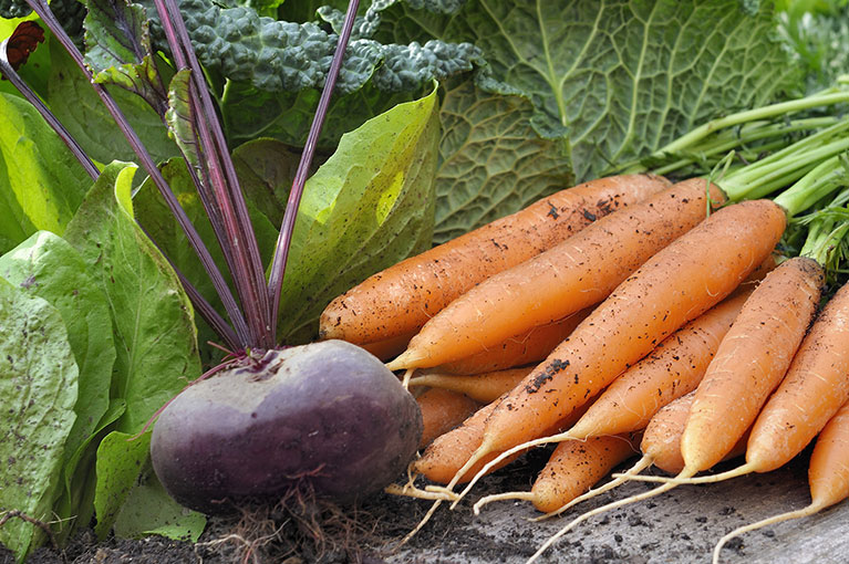 Our top picks for planting Autumn vegetables