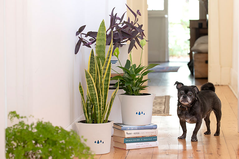 Our top picks for your next house plant