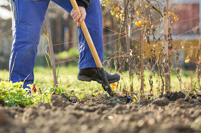 Winter winning gardening tips
