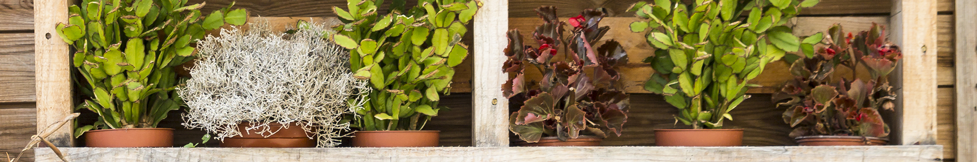 <p>Ideas for planting your DIY vertical wall garden</p>