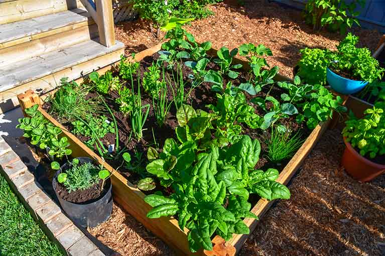 What vegetables to plant now for a summer harvest